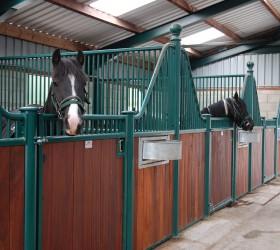 Meet The Horses